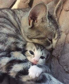 Cute Overload: Internet`s best cute dogs and cute cats are here. Aww pics and adorable animals. Cute Cats And Kittens, Baby Cats, Kittens Cutest, Cats In Love, Cute Kitten Pics, Tabby Kittens, Kittens Meowing, Baby Kitty, Kitten Love