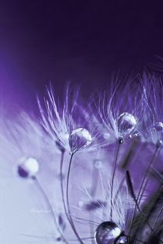 Magicness by Anastasia Ri