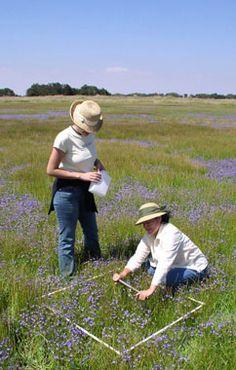 De Ley lab projects: Santa Rosa Plateau