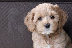 Fundraiser by JAX  and Benny : Save Benny the Puppy
