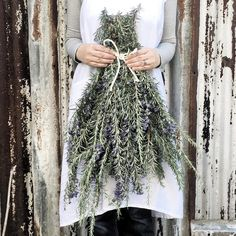 When you forget to prune the Rosemary . Happy week ahead dear family and friends xx 📸 by 💜 Nothing But Flowers, Happy Week, Morning Mood, Rose Marie, Farms Living, French Countryside, Country Christmas, Rustic Charm, Tis The Season