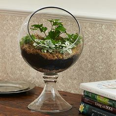 Love this terrarium bowl from Stonewall Kitchen.