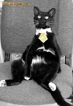 Tuxedo Cat – Pictures of Cats – an illustrated, online #catmeow - Catsincare.com!