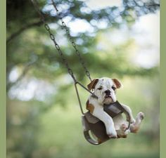 Dogs Love to Swing, too