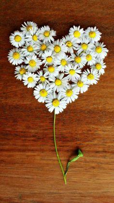 Free Image on Pixabay - Daisy, Heart, Daisy Heart, Love Heart In Nature, Heart Art, Drawing Wallpaper, Flower Wallpaper, Love Flowers, Beautiful Flowers, Flower Rangoli, Daisy Love, Heart Images