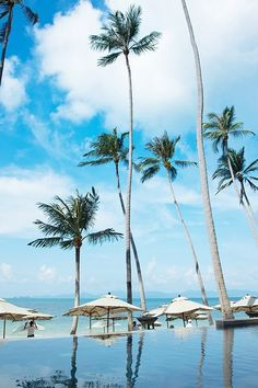 Enjoy the view through the swaying palm trees at Dewey Seasons Resort Koh Samui, Thailand's pool. Can I visit every four seasons hotel before I died? Design Hotel, Beautiful Hotels, Beautiful Beaches, Places To Travel, Places To See, Amazing Places On Earth, Koh Samui, Samui Thailand, Asia