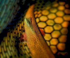 Net light | Flickr - Photo Sharing!