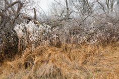 https://flic.kr/p/BN8N1S | Maybury State Park - II, Northville, MI, December, 2015 | NAP_Canon EOS 5D Mark III_20151206__L5C5112_0176-Edit.tif