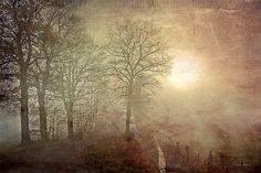 Fog Photography Fine Art Photograpy Autumn by SkeeterPhotoArt