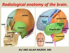 Frontal Lobe Dementia Natural Treatment