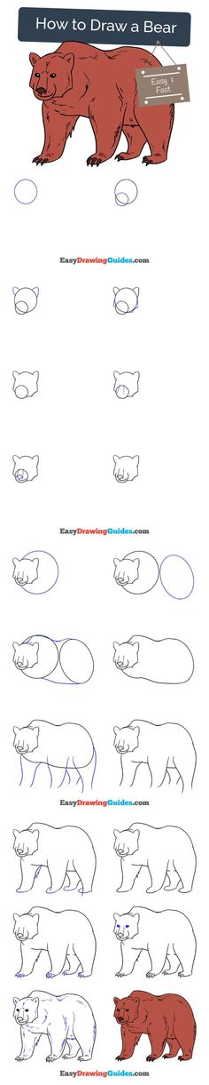 Learn How to Draw a Bear: Easy Step-by-Step Drawing Tutorial for Kids and Beginners. #bear #drawing #tutorial. See the full tutorial at https://easydrawingguides.com/how-to-draw-a-bear/