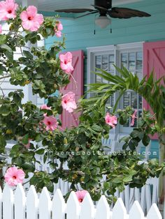 Island Porch Perfection - I love the turquoise house and the pink shutters! Cottage Porch, Cute Cottage, Beach Cottage Style, Cottage Exterior, Beach Cottage Decor, Coastal Cottage, Coastal Homes, Coastal Style, Coastal Decor