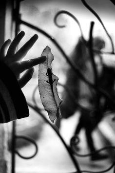 La Famille - Alain Laboile. Las luces y sombras y el juego con lagartijas