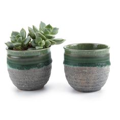 Ceramic Summer Trio Succulent Plant Pot