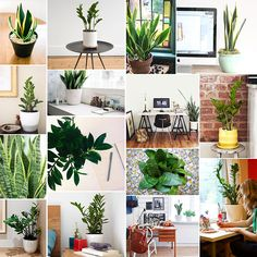 Our favorite low-maintenance, low-light plants for the office or desk: ZZ plant and snake plant