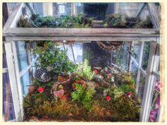 Fairy garden ...terrarium