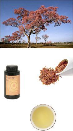 """Weil es einer unserer meist-bestellten Tees ist, habe ich ein wenig nachgelesen. Jetzt blüht er wieder in Peru, Paraguay oder Argentinien. Der Lapacho Baum galt bei indianischen Ureinwohnern als """"Baum des Lebens"""". Im 17. Jahrhundert war die Rinde so begehrt, dass man die Bäume speziell schutzen musste. Inhaltstoffe wie das antibiotischen """"Lapachol"""" wirken sich positiv auf die Verdauung aus. Ideal für eine Januar-Kur, zum #Detoxen.."""