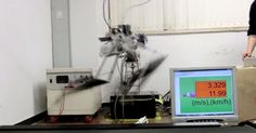 This Velociraptor-Like Robot Runs Much, Much Faster Than You