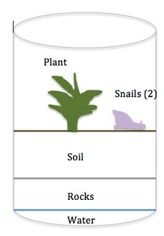 I completed my mesocosm today.   I used my knowledge of ecosystems and biospheres to come to the theory that if I provide the right amount of water, soil, and plants and organisms in a closed bottle, I will be able sustain a suitable environment for carbon, water, energy, and nutrient cycles to occur.  For this I used the following: -Rocks  -Water -Glass jar -Soil -Snails (2) -Plant