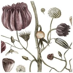 Swedish designer Jonna Fransson has made two beautiful botanical drawings, now for sale at the Museum of Modern Art in Stockholm. In the details shown here, you can see the delicate drawings - and thesoft, muted pastels, often seen in contemporary design.