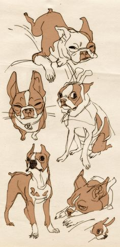 shoomlah is one of my favorite illustrators on deviantart... and here's a little study they did of Boston Terriers. Such cute sketching. :)