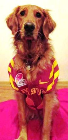 Photo Gallery: Cy's Pets of the Week: Week Four - Iowa State University Athletics Official Web Site - www.CYCLONES.com - The home of Iowa State Cyclone Sports