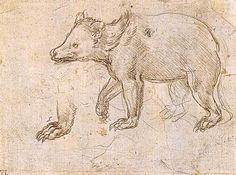 Studies of a Bear Walking - Leonardo da Vinci 1484.  Gallery: Metropolitan Museum of Art, New York City