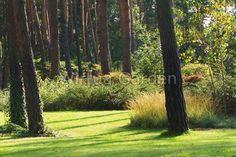 ogrod lesny Shade Garden, Soda, Woodland, Villa, Home And Garden, Shades, Outdoors, Gardening, Google
