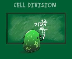 : )~  Cell Division