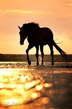 - Sunrises and sunsets - Animals Cute Horses, Pretty Horses, Horse Love, Beautiful Horses, Animals Beautiful, Horse Photos, Horse Pictures, Equine Photography, Animal Photography