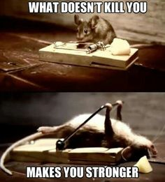 Most funny animal memes and humor pics - Funny Animal Quotes - - Most funny animal memes and humor pics Humor Animal, Funny Animal Memes, Animal Quotes, Funny Animal Pictures, Funny Photos, Funny Memes, Meme Pictures, Hilarious Pictures, Funny Pics With Captions