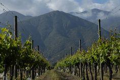 Tres Palacios - traumhafte Blicke durch endlose Reihen von Rebstöcken auf die majestätischen Anden. www.cwc.de