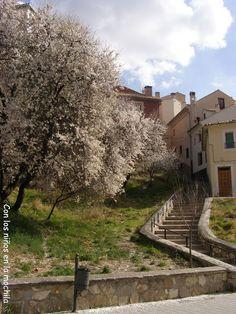 Paseo del Huécar con los árboles en flor.