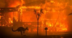Apocalyptic Scenes in Australia as Fires Turn Skies Blood Red - The New York Times. As the fire stalked the east coast of Australia on Tuesday 31 Dec 2019, the daytime sky turned inky black, then blood red. Emergency sirens wailed, followed by the thunder of gas explosions. Thousands of residents fled their homes and huddled near the shore. There was nowhere else to go.