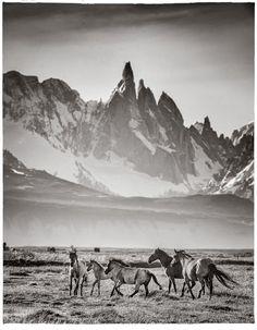 Wild horses   Fine art   Eliseo Miciu