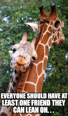 Animal Babies baby animals are the cutest giraffe Giraffes Cute Creatures, Beautiful Creatures, Animals Beautiful, Cute Baby Animals, Animals And Pets, Funny Animals, Wild Animals, Animals Planet, Animal Pictures
