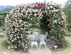 Rose bush arbor/Source: Designing Idea website Garden Arbor, Lawn And Garden, White Trellis, Rose Arbor, Japan Garden, Minimalist Garden, Garden Arches, Big Plants, Rose Bush