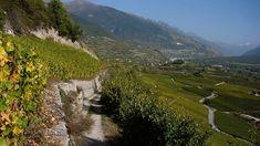 Vineyard Trail between Salgesch and Sierre - This 2.5-hour tour is like a walk through an open-air museum.