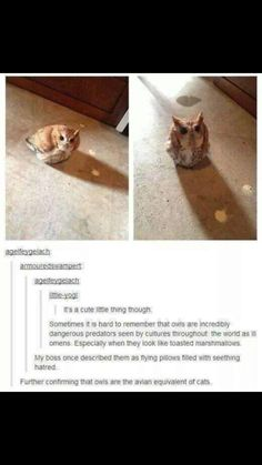 """42 Hilarious Animal Memes That Are So Cute You're Gonna Die - Funny memes that """"GET IT"""" and want you to too. Get the latest funniest memes and keep up what is going on in the meme-o-sphere. Animal Memes, Funny Animals, Cute Animals, Funny Owls, Animal Logic, Animal Facts, Animal Humor, Funny Cute, The Funny"""