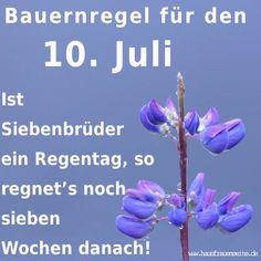 Bauernregel für den 10. Juli - Siebenbrüder  Ist Siebenbrüder ein Regentag, so regnet's noch 7 Wochen danach!