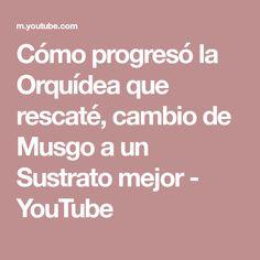 Cómo progresó la Orquídea que rescaté, cambio de Musgo a un Sustrato mejor - YouTube Youtube, Get Well Soon, Plants, Youtubers, Youtube Movies
