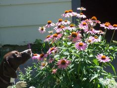 Polly pointing a butterfly. :)