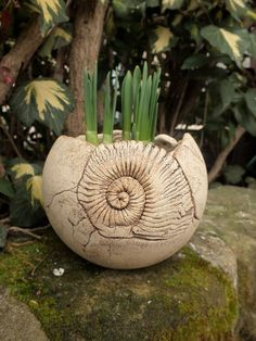 Here you can buy a beautiful plant pot from my ceramics workshop. It was made of white clay and then treated with oxides that protect the incorporated ammonite … Source by Hand Built Pottery, Slab Pottery, Ceramic Pottery, Cement Art, Cement Planters, Ceramic Workshop, Clay Teapots, Ceramic Techniques, Gourd Art