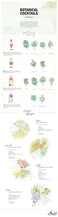 Botanical Cocktails #infographic #drinks #cocktails