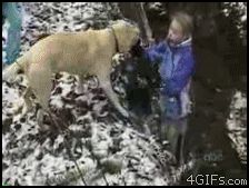 19 GIFs of Animals Knocking Out Kids--the one where the dog is jumping the ravine in the snow is really, really funny.