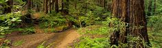 Camp Spot?  Butano State Park is located in a secluded Redwood-filled canyon.  San Francisco Bay Area.