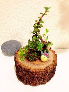 Succulents in a Tree Stump Planter with Miniature Totoro doll. ONE OF A KIND by KodamaForest on Etsy https://www.etsy.com/listing/237133941/succulents-in-a-tree-stump-planter-with