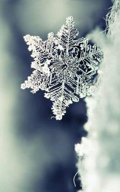 Most beautiful iphone wallpapers - Page 31 — wallpaper Winter Snow, Winter Time, Winter Photography, Nature Photography, How To Make Snowflakes, Easy Snowflake, Snowflake Decorations, Paper Snowflakes, Snow Flower