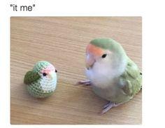 Two Cute Little Birbs : aww Funny Birds, Cute Birds, Cute Funny Animals, Cute Baby Animals, Funny Cute, Love Birds Pet, Animal Pictures, Cute Pictures, Tier Fotos