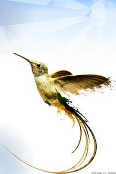The Rise Of The Colibri by PaintMeUp.deviantart.com on @DeviantArt